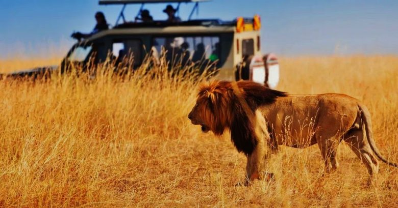 African Safari - Various Myths and Misconceptions - Travel and Leisure